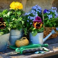 vedi offerta Utensili per il giardinaggio